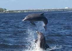 Leslie Wells Realty Manatee River Florida Dolphins